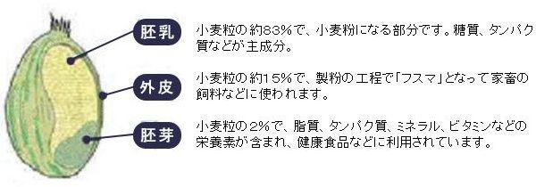 小麦紹介-06