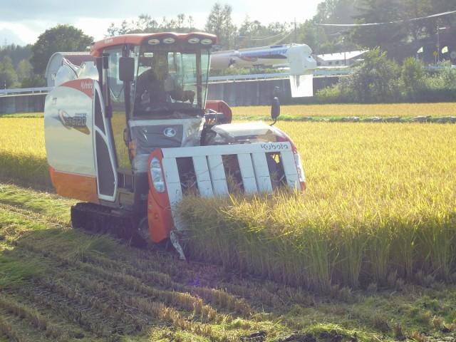 水稲の収穫風景