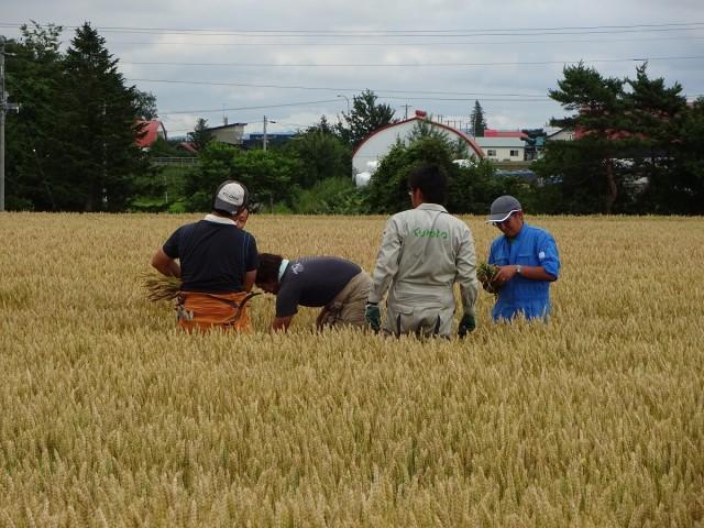 畑作専門部の調査活動 小麦
