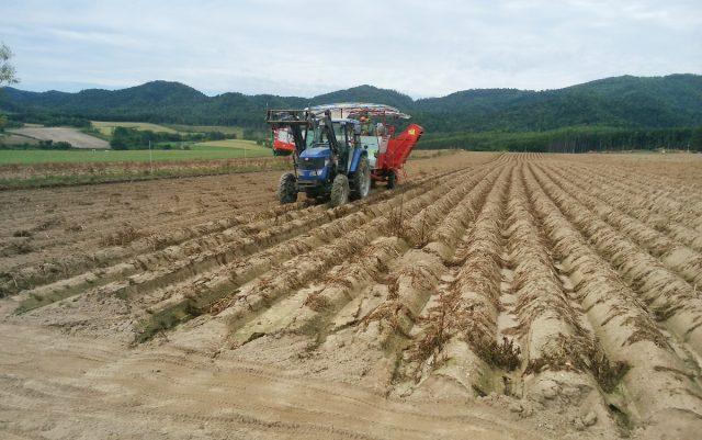 収穫の様子1