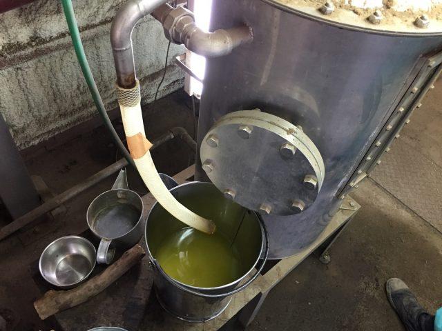 採取したシソ油