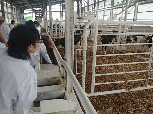 牛舎の見学