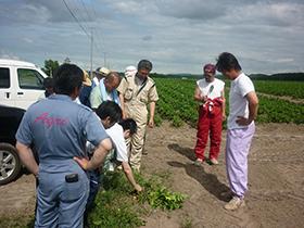 馬鈴薯減農薬研究部会 取組み1