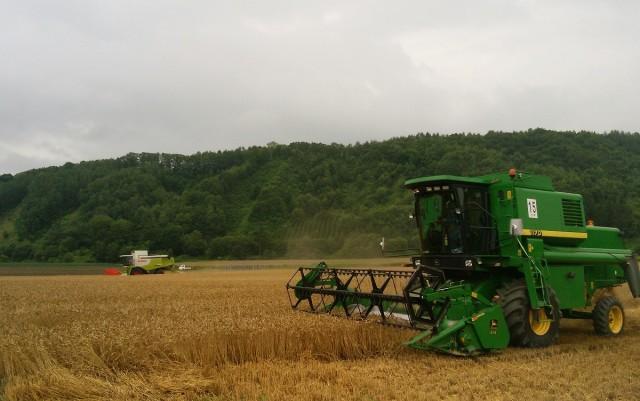 小麦刈り取りの様子