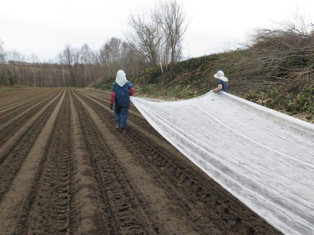 農業用被覆資材を被せる様子