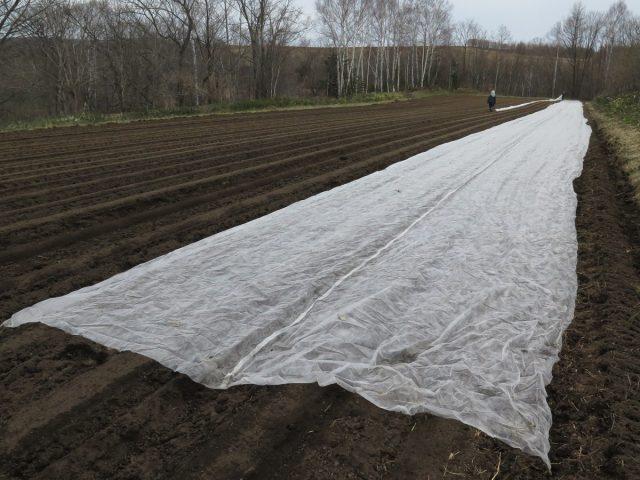 農業用被覆資材を被せる様子2
