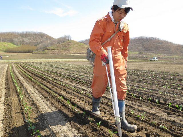 農家実習2