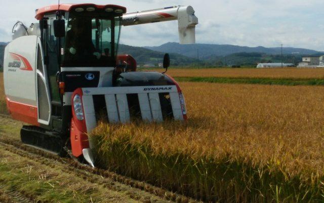 収穫の様子