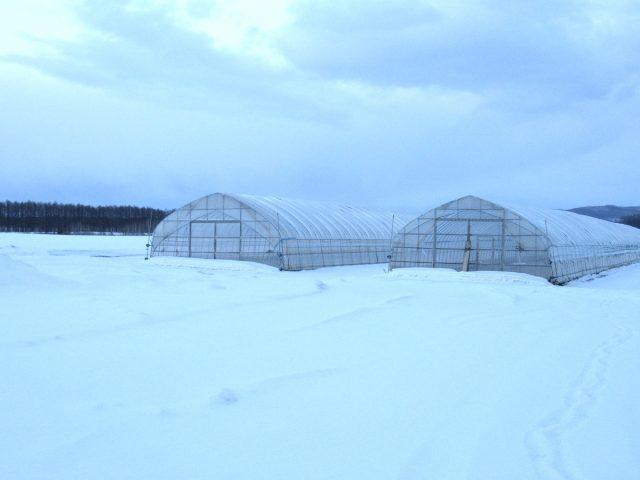 冬のビニールハウスの様子