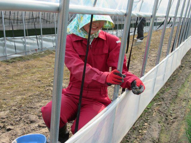 農家実習3