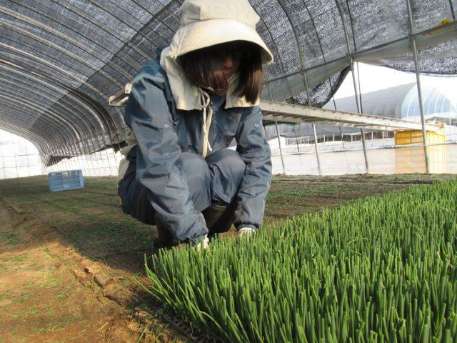 農家実習4