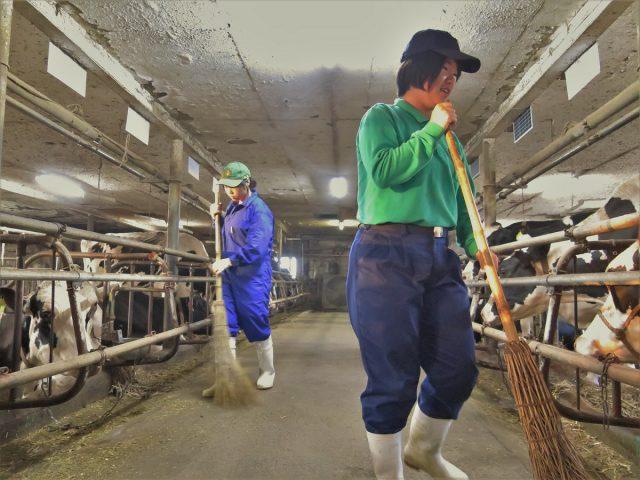 酪農業体験の様子