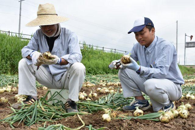 農業体験の様子2