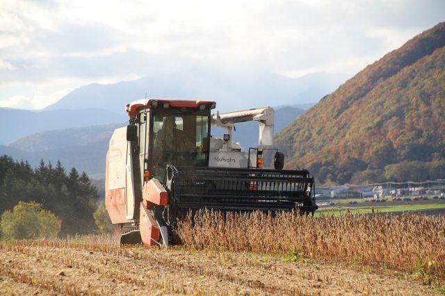 大豆収穫の様子