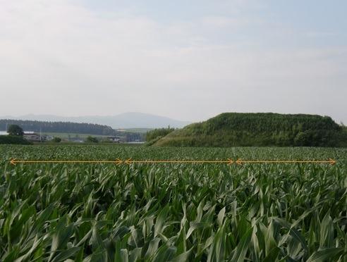 デントコーンの畑