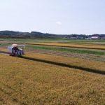 水稲収穫の様子1