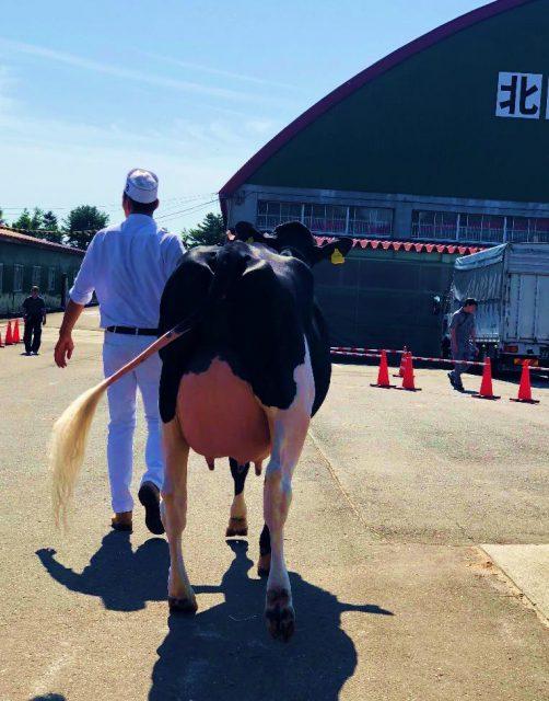 北海道総合家畜共進会の様子2