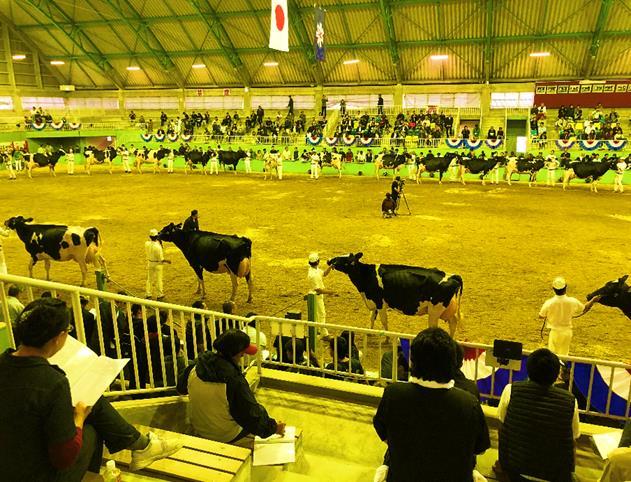 北海道総合家畜共進会の様子3