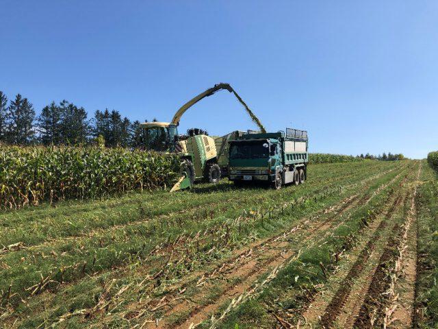 デントコーン収穫風景1