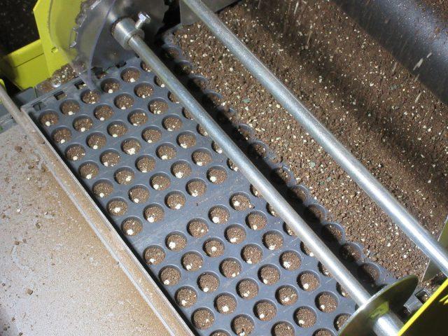 玉ねぎ播種作業の様子2