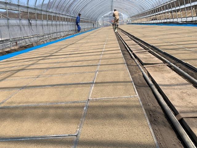 水稲栽培の様子3