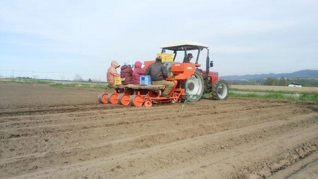 種子用馬鈴薯植え付けの様子1
