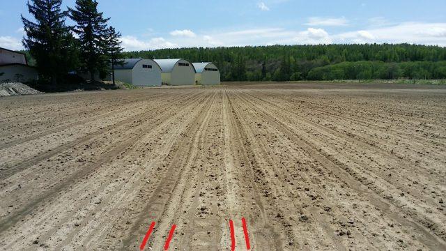てん菜植え付け後の畑
