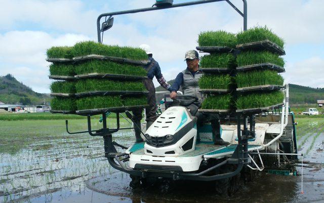 水稲苗移植作業の様子1