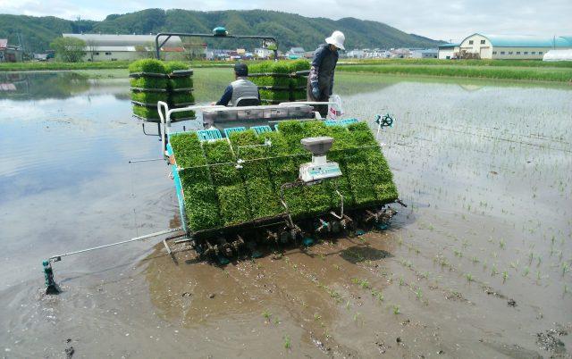 水稲苗移植作業の様子2
