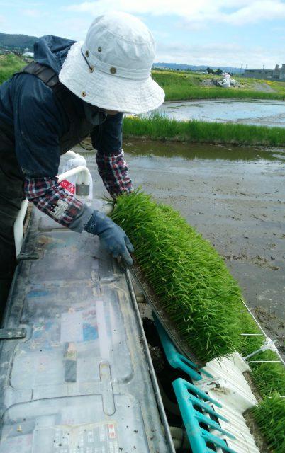 水稲苗移植作業の様子3