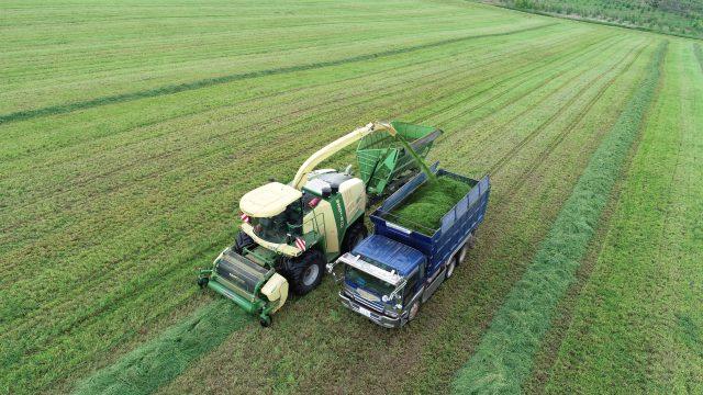 収穫作業の様子