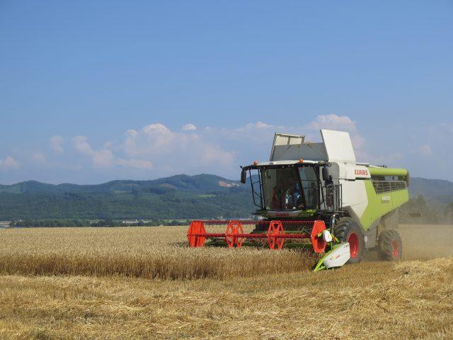 秋まき小麦の刈り取り作業の様子1