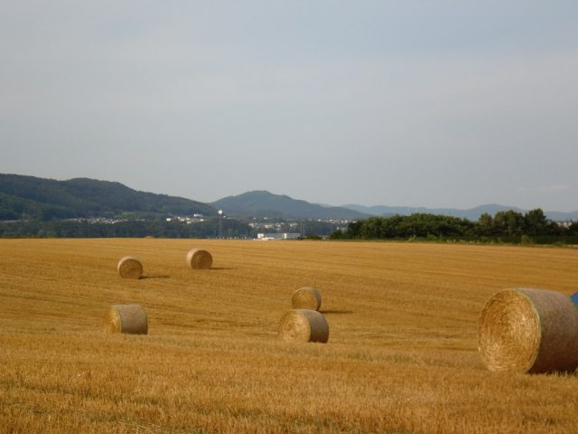麦稈ロールのある風景