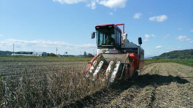 小豆の収穫風景1