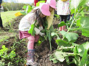 収穫体験の様子3