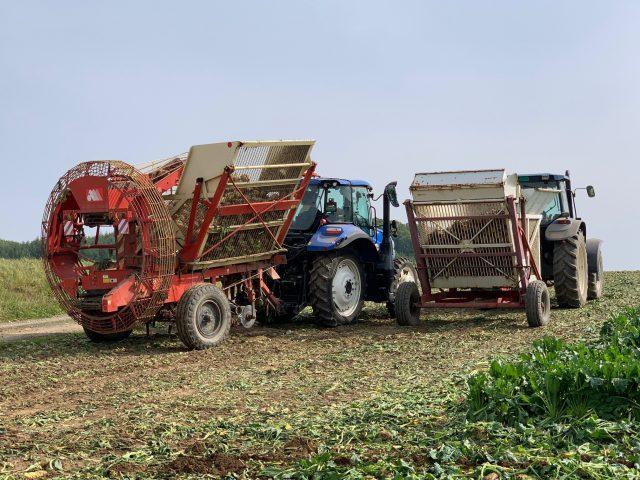 ビート収穫の様子1