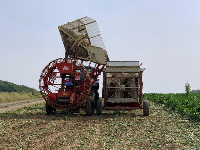 ビート収穫の様子2