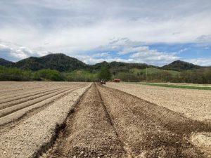 高畝の播種床作り