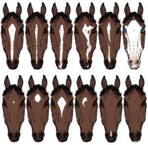 馬の模様 顔