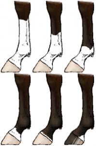馬の模様 脚