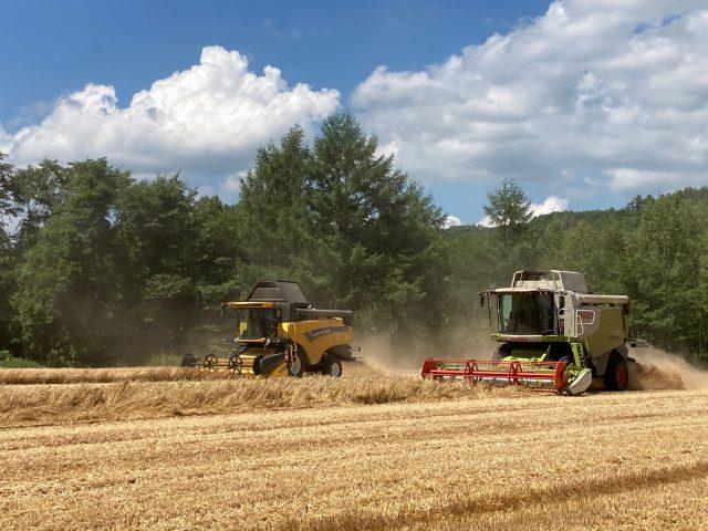 小麦収穫の様子2