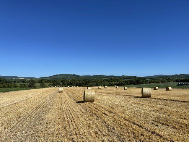 麦稈が並ぶ風景1