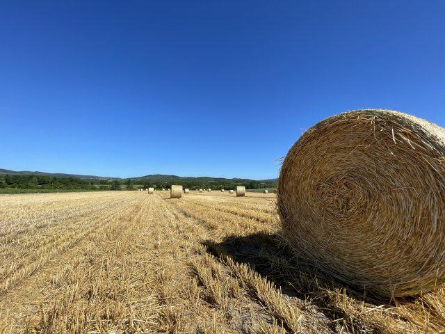 麦稈が並ぶ風景2