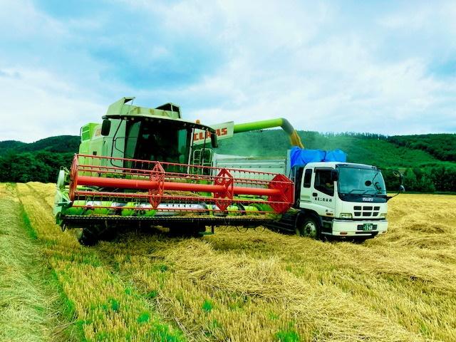 小麦収穫の様子